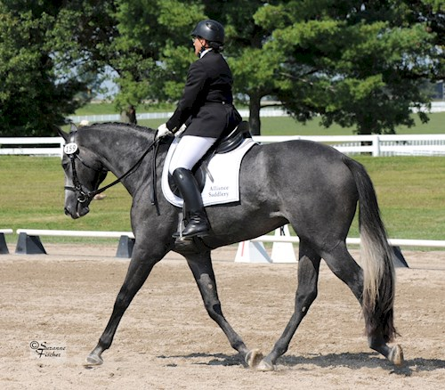 dressage at the claremore expo